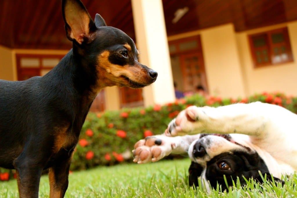 Calmante para cachorro