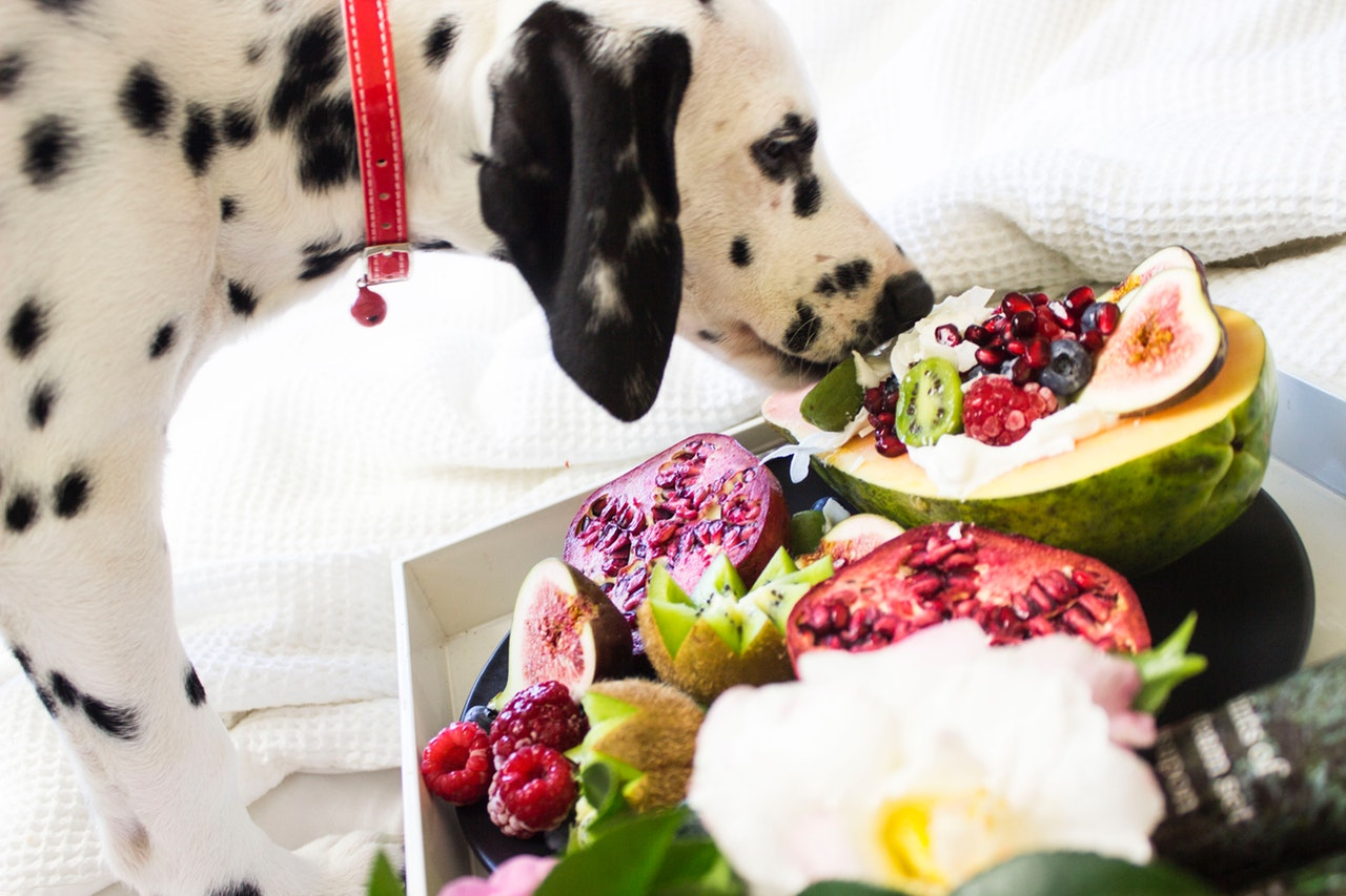 cachorro pode comer uva