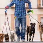 Ganhar dinheiro como Dog Walker