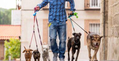 Dog Walker: ganhe dinheiro passeando com cães