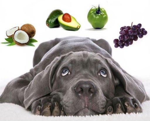 Cachorro pode comer melão