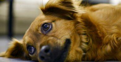 Induzir vômito no cachorro: como e quando fazer isso