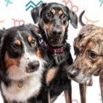 raça de cachorro certa para seu signo