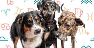 A raça de cachorro certa para seu signo