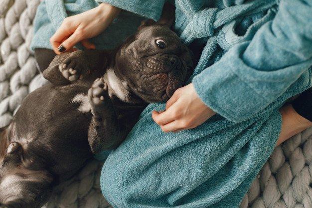 nomes para cachorro pequeno