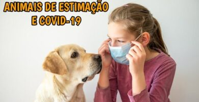 Animais de estimação e COVID-19: tudo que precisa saber!