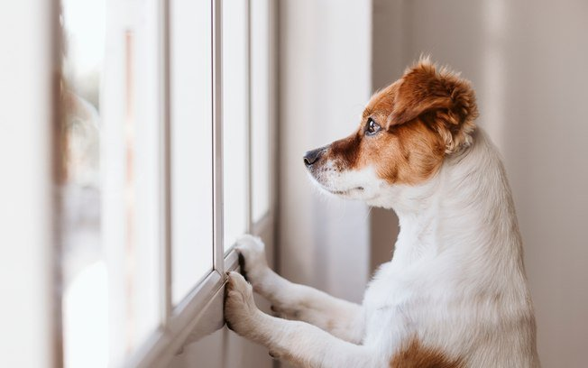 ansiedade de separação em cães
