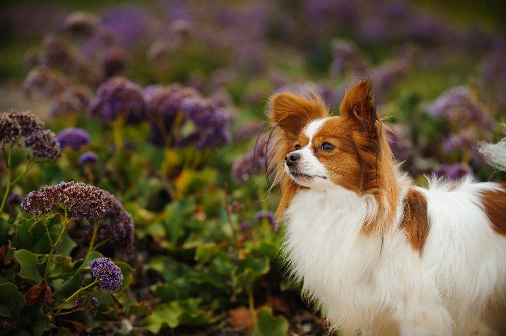 raças de cachorros fofos