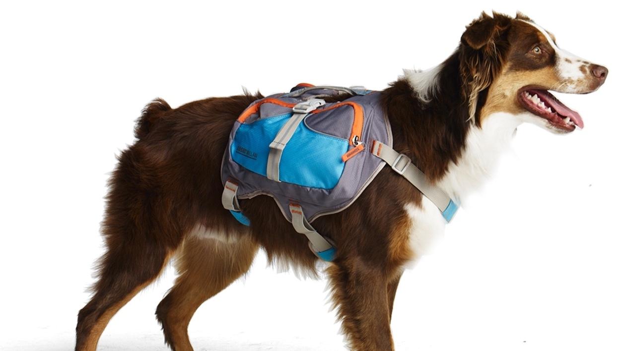 mochila de cachorro