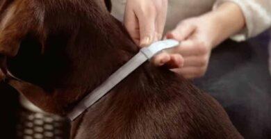 Melhor coleira de pulgas para cães: elimine pulgas e carrapatos
