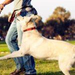 Livro para adestramento de cães
