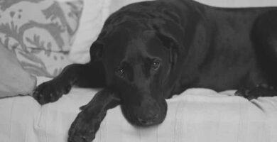 10 principais venenos para cães
