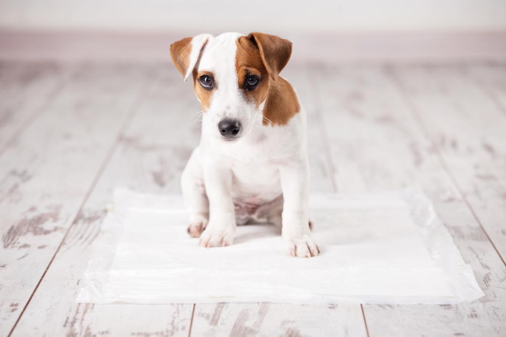 tapetes higiênicos para cachorro