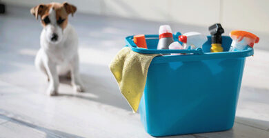 Itens domésticos perigosos para cães: quais evitar!
