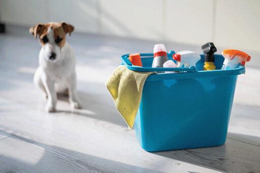 itens domésticos perigosos para cães
