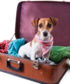 Atestado Sanitário para Cães e Gatos