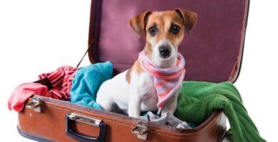 O que é o Atestado Sanitário para Cães e Gatos