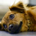 sintomas de envenenamento em cães