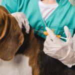 microchips para cães