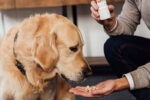 paracetamol é seguro para cães