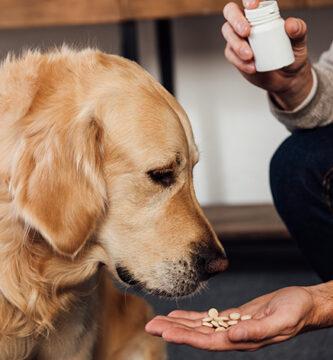 Paracetamol é seguro para cães?
